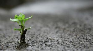 paciência é como uma semente